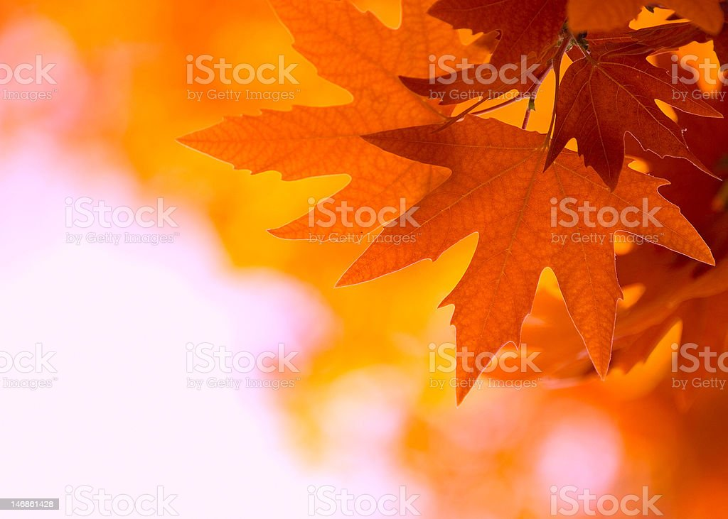 autumn leaves, very shallow focus royalty-free stock photo