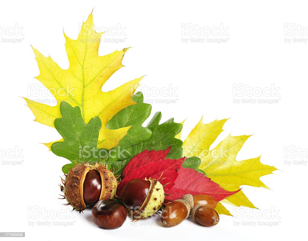 autumn leaves with acorns and chestnuts royalty-free stock photo