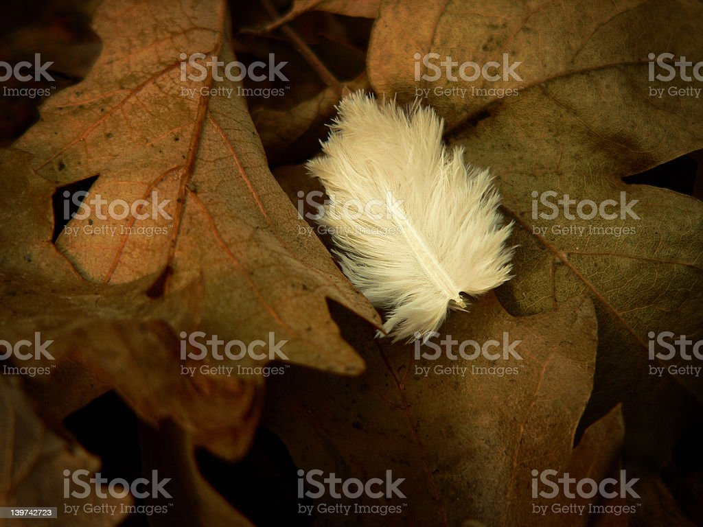 Autumn Leaves with Feather royalty-free stock photo