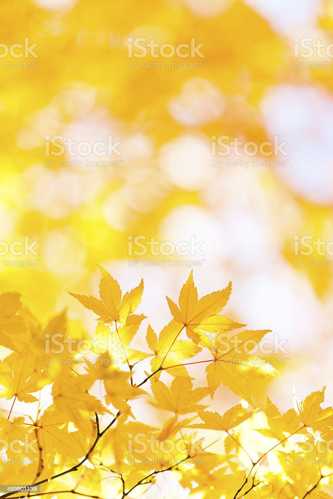 Autumn Leaves with sunlight royalty-free stock photo