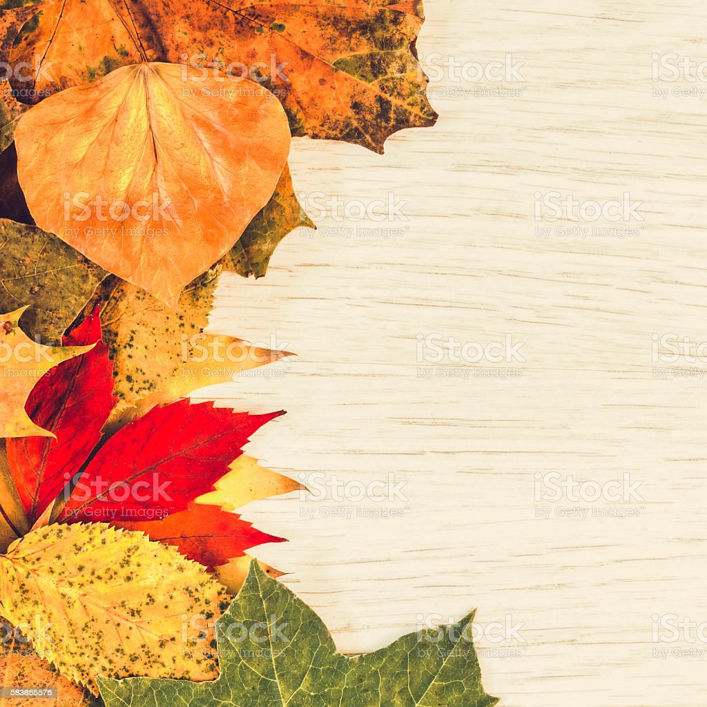 Autumn leaves wood background stock photo