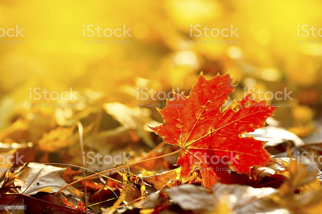 Autumn Leaves-XXXL stock photo