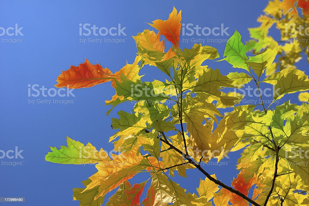 Autumn leavs stock photo