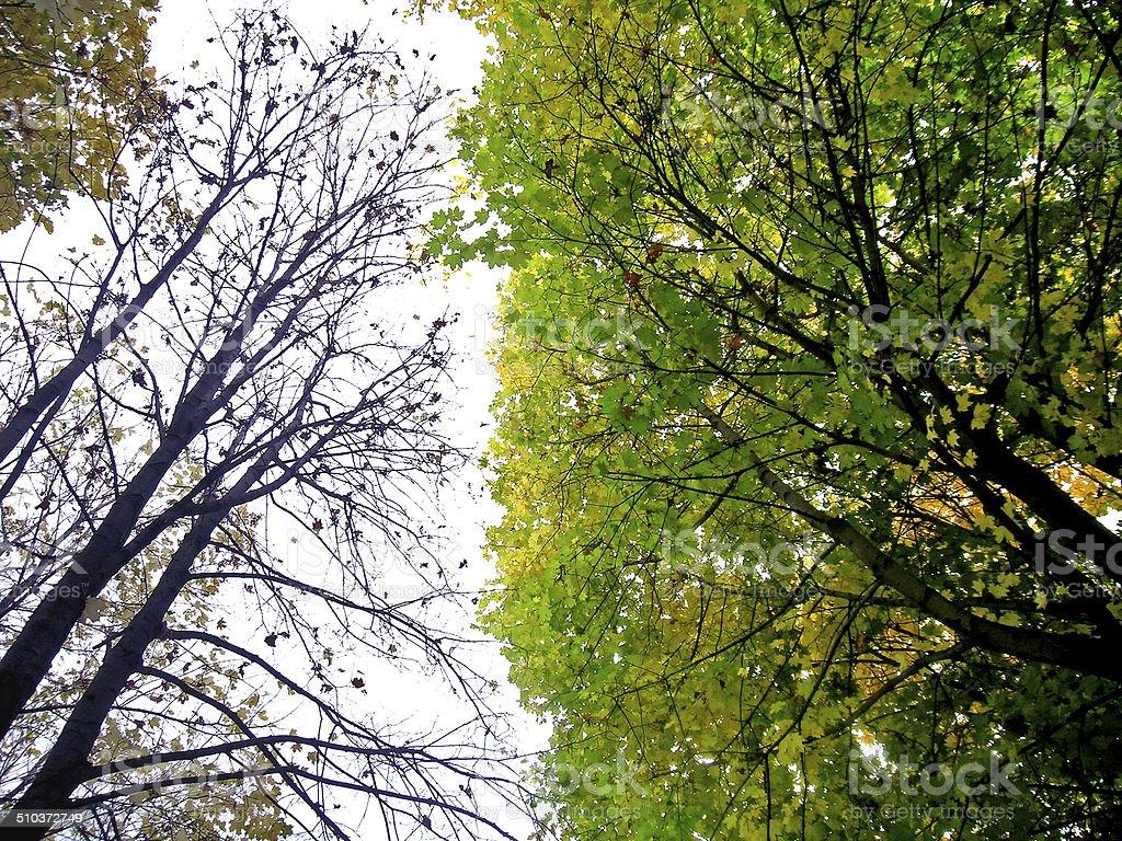 Autumn: life and death stock photo