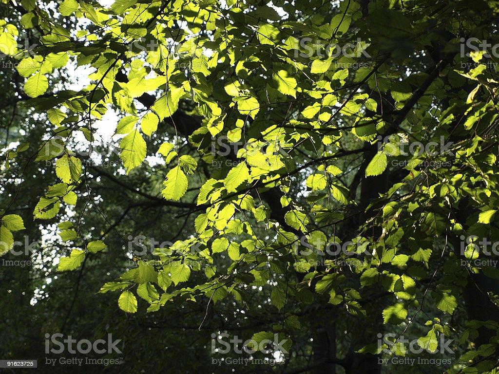 Leichte Filtred durch Blätter Herbst Lizenzfreies stock-foto