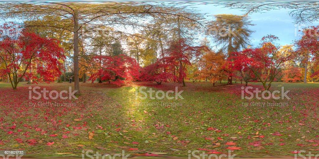 Autumn Light in Westonbirt Arboretum stock photo