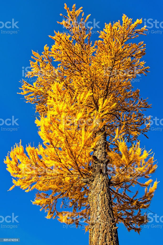 Autumn Lights Torch stock photo