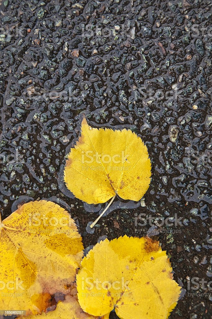 Autumn Linden royalty-free stock photo