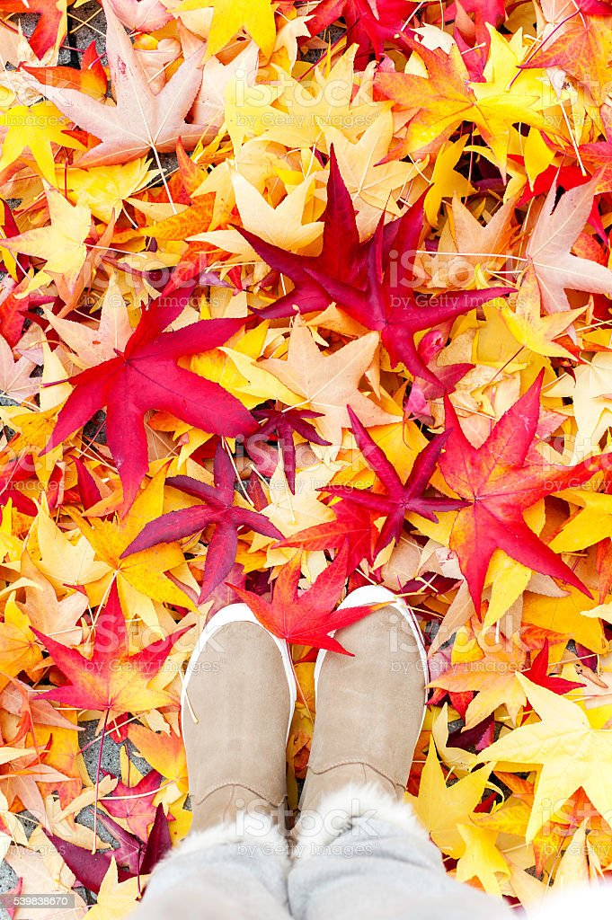 Autumn. Looking at plenty colorful maples leaves from above. stock photo