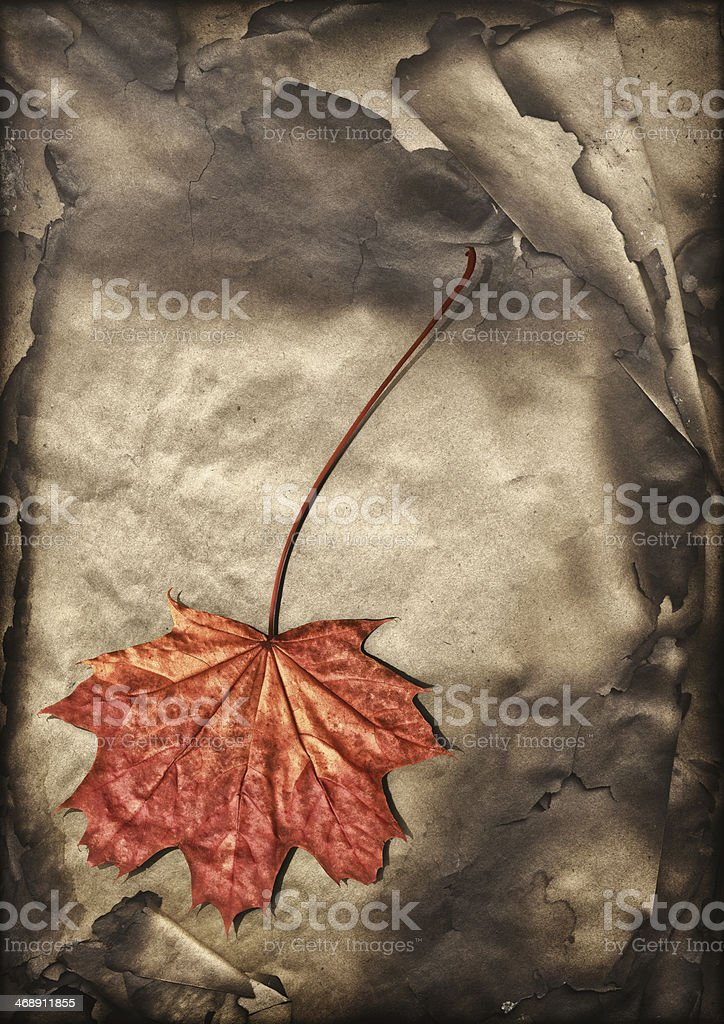 Autumn Maple Leaf Isolated on Pile of Burnt Paper Sheets royalty-free stock photo