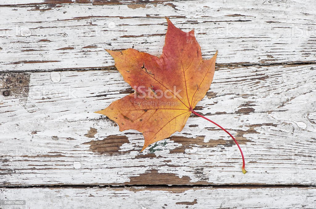 Autumn maple leaf on wooden. Top view. stock photo
