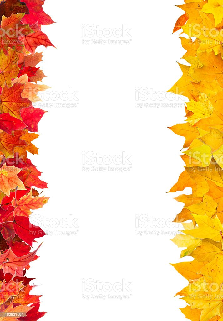 Autumn maple leaves frame stock photo