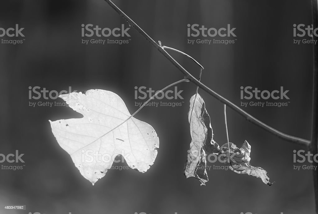 Autumn maple leaves in the forest stock photo