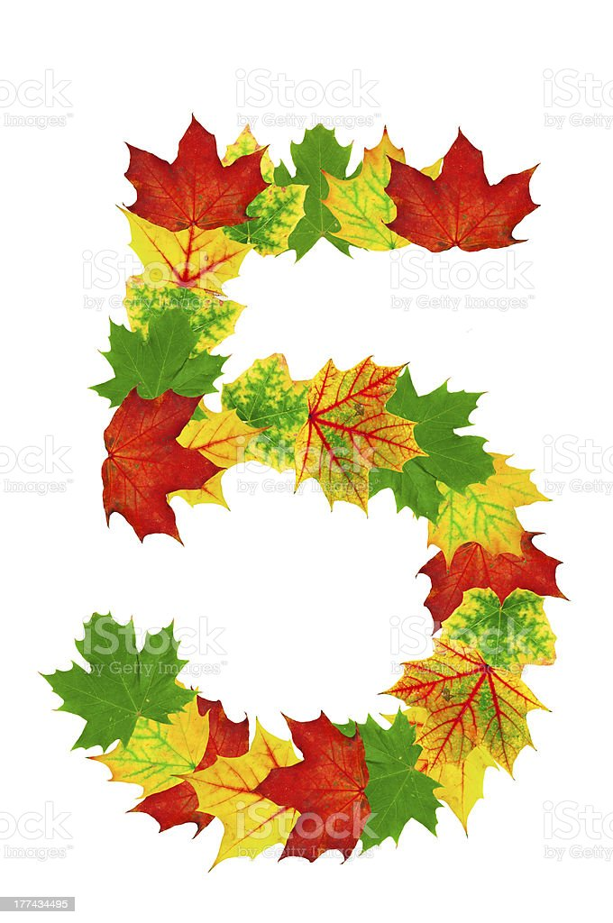 Autumn maple Leaves in the shape of number 5 stock photo