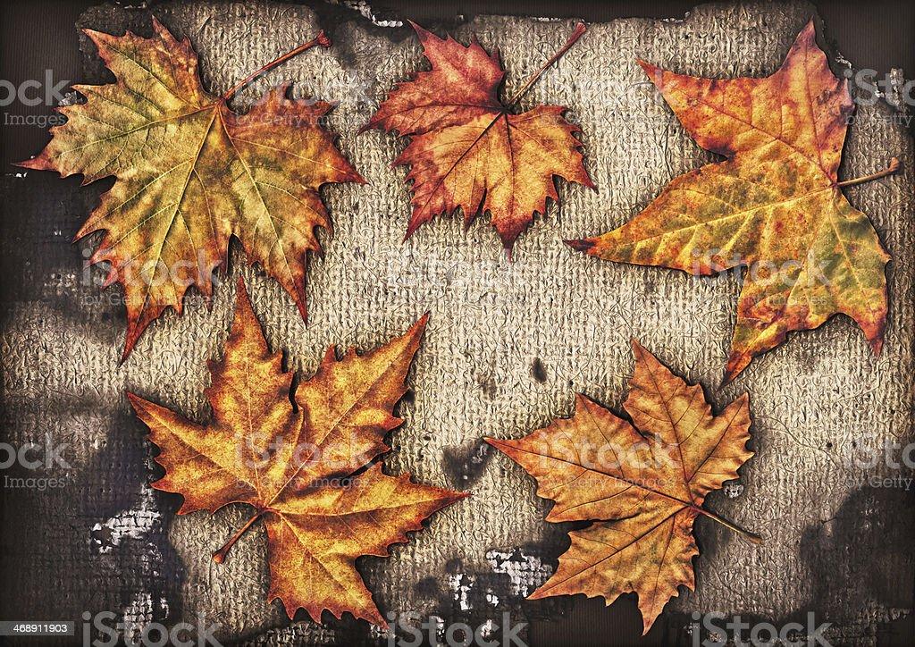Autumn Maple Leaves Isolated On Burnt Burlap Canvas Backdrop royalty-free stock photo