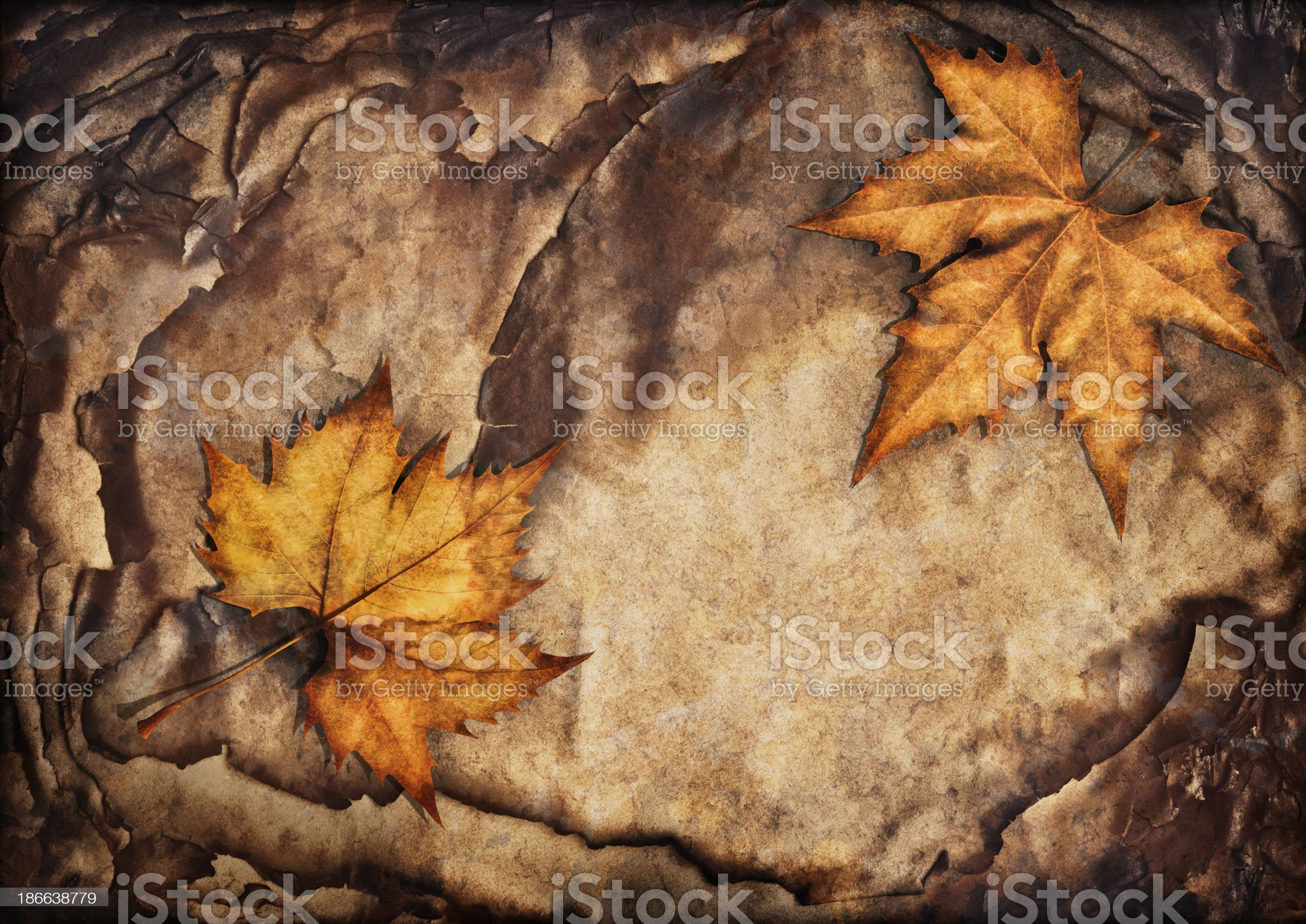 Autumn Maple Leaves Isolated on Pile of Burnt Paper Sheets royalty-free stock photo