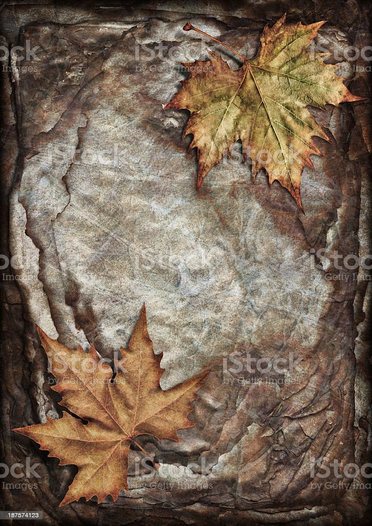 Autumn Maple Leaves Isolated on Pile of Burnt Parchment Sheets royalty-free stock photo