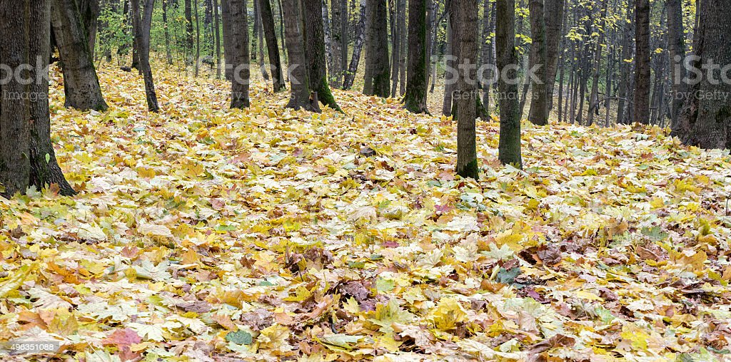 Лежать в листьях фото 758-255