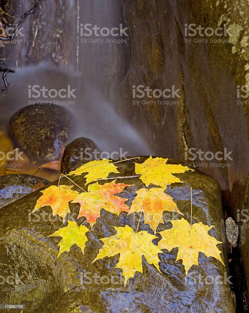 Autumn maple leaves on boulder royalty-free stock photo