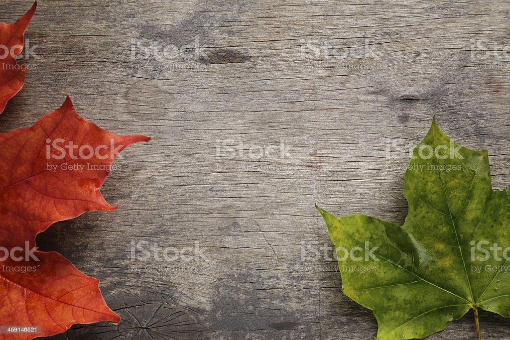 autumn maple leaves on wood surface royalty-free stock photo