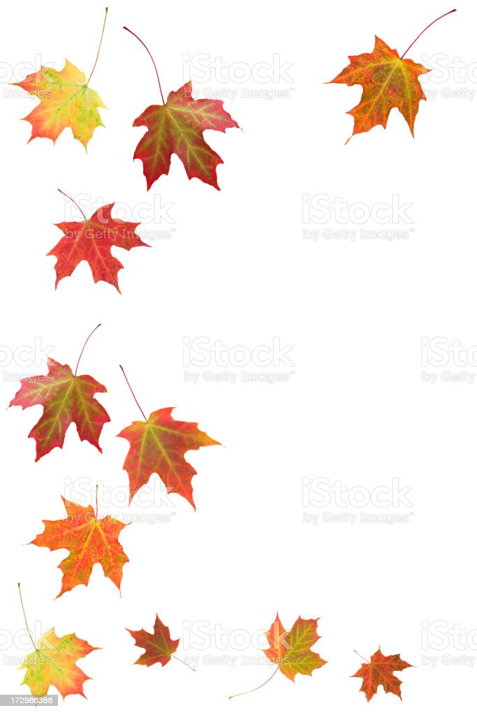 Autumn Maple Leaves (XXL) royalty-free stock photo