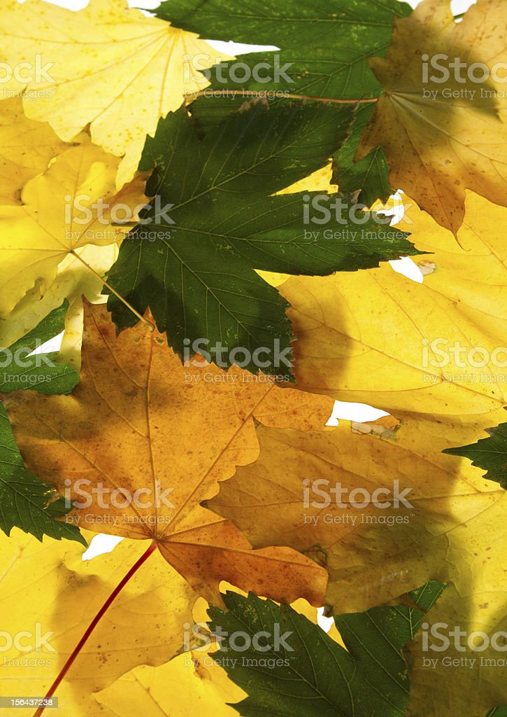 autumn maple leaves seamless pattern background royalty-free stock photo