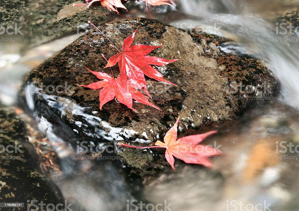 Autumn Maple Leaves with Flowing Water royalty-free stock photo