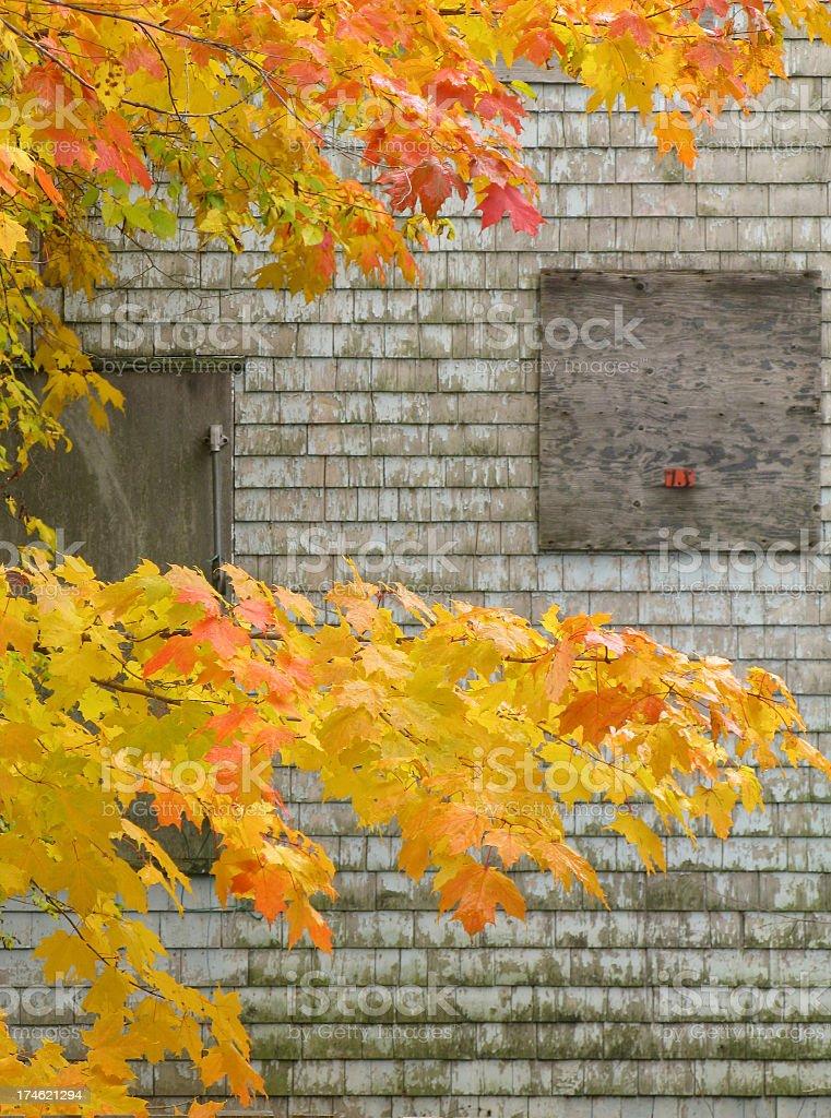 Autumn Maple with barn. stock photo