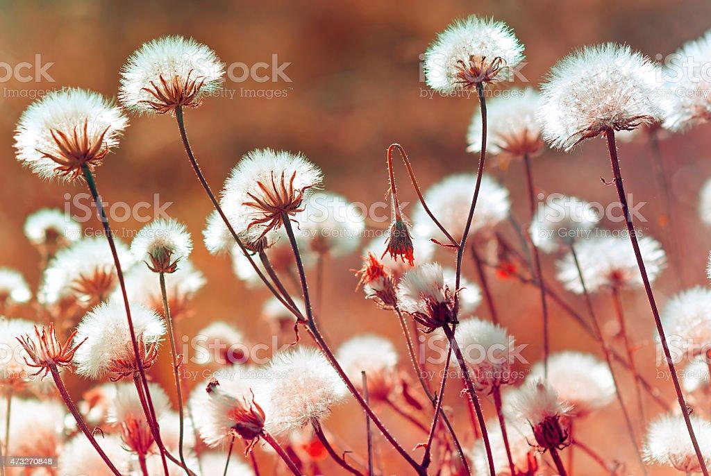meadow plantes de l'automne au coucher du soleil (Flouté) photo libre de droits
