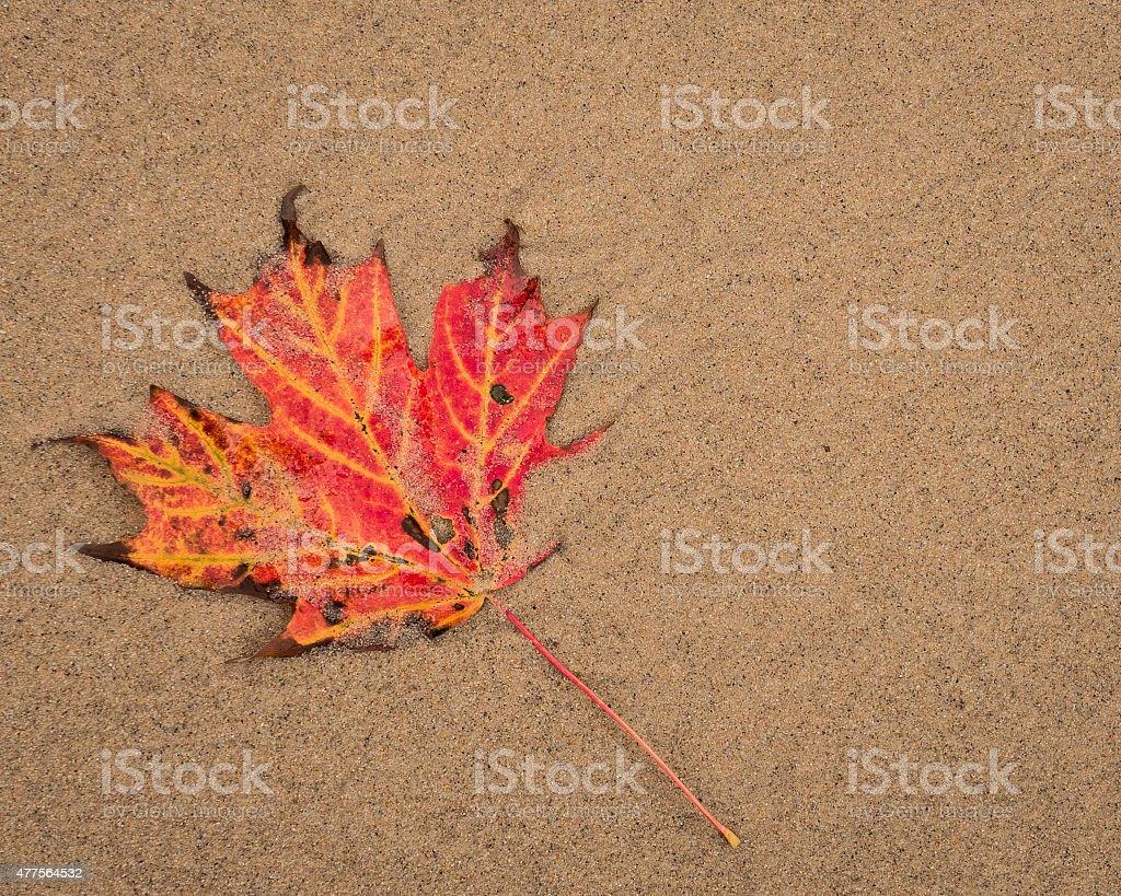 Autumn Meets The Beach stock photo