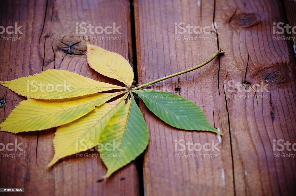 Autumn melancholy. Chestnut leaf on a wooden floor. stock photo