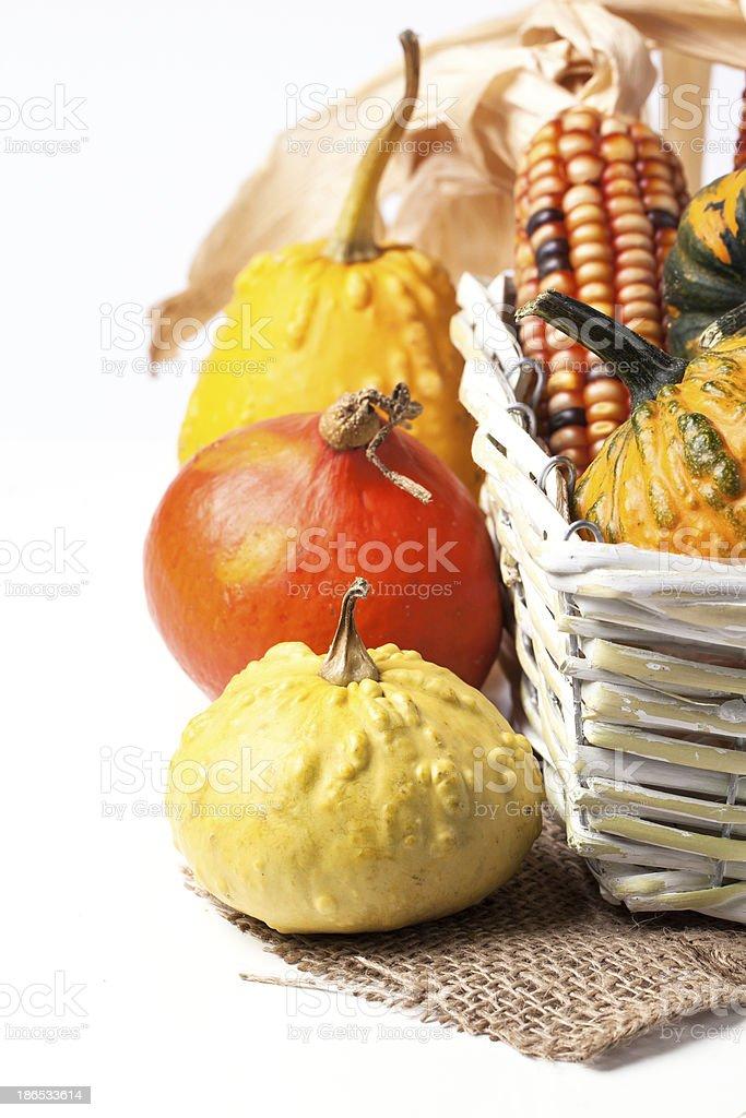 Autumn mini pumpkins royalty-free stock photo