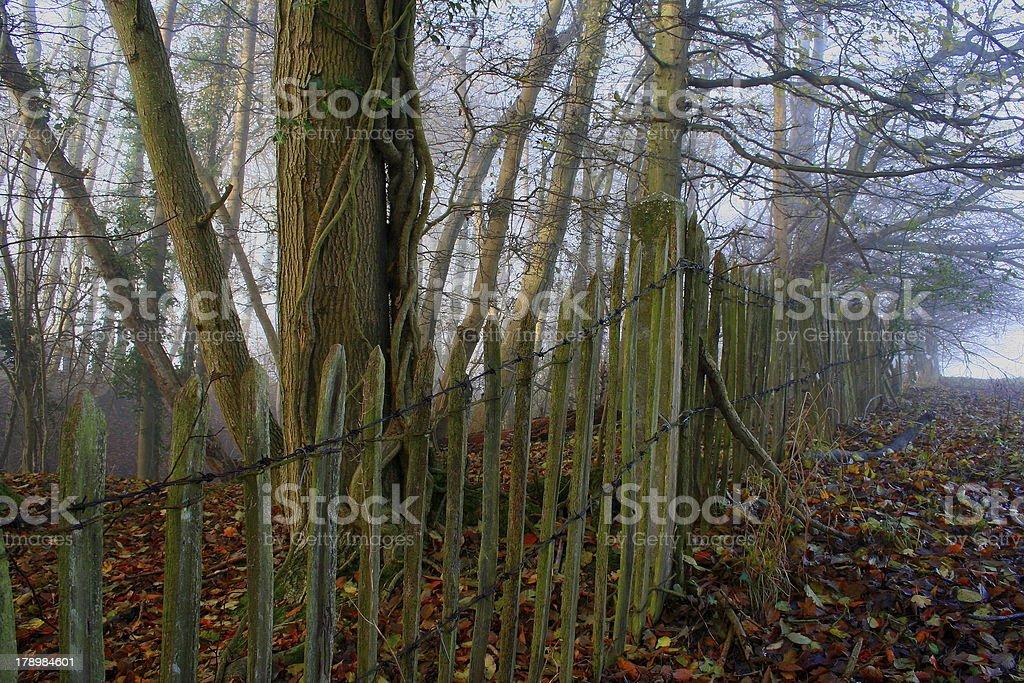 Autumn Misty Woodland royalty-free stock photo