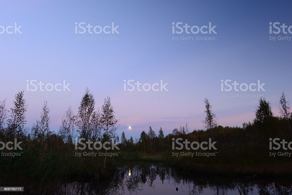 Autumn moon in the sky over the forest swamp stock photo
