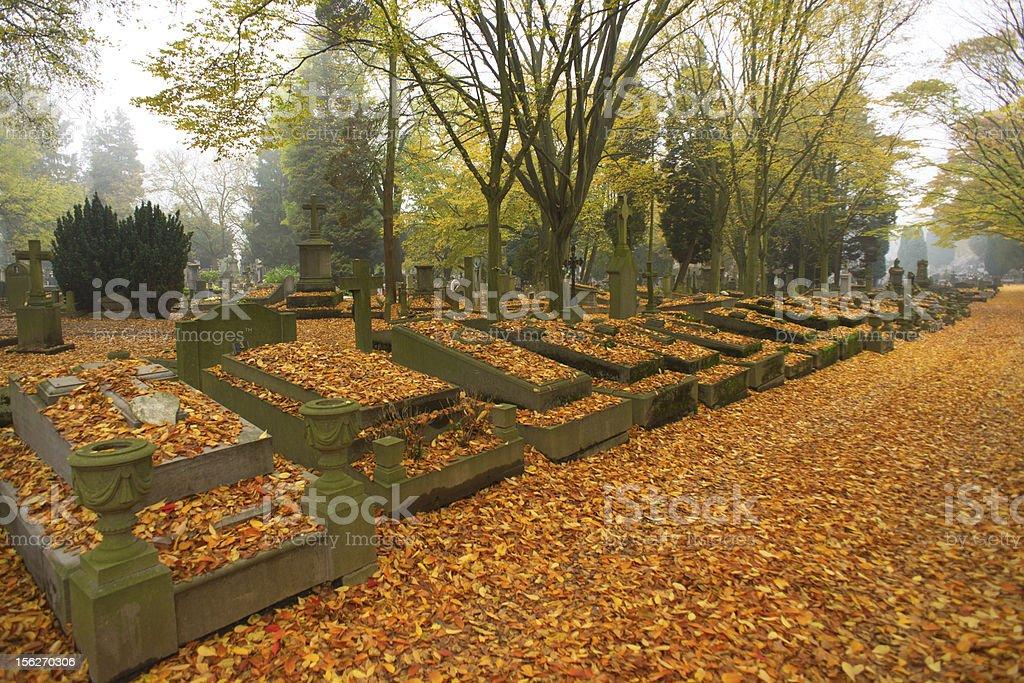 Autumn morning 2 royalty-free stock photo