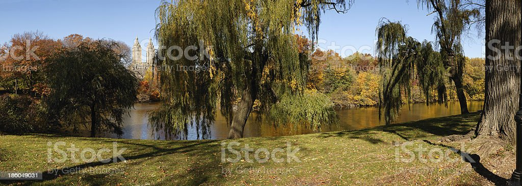 Autumn morning Central Park New York - Weeping willows royalty-free stock photo