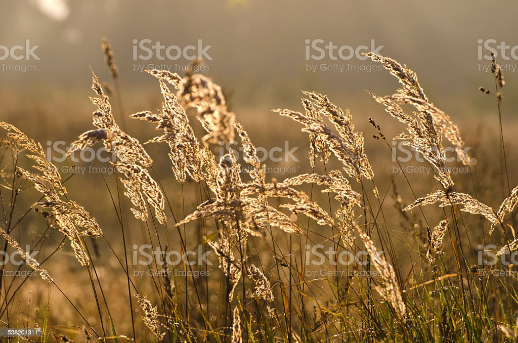 autumn morning grass blur background and sunrise light stock photo