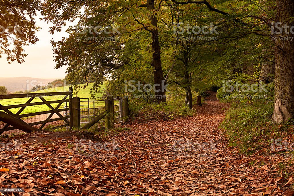 Autumn Morning in the Surrey Hills stock photo