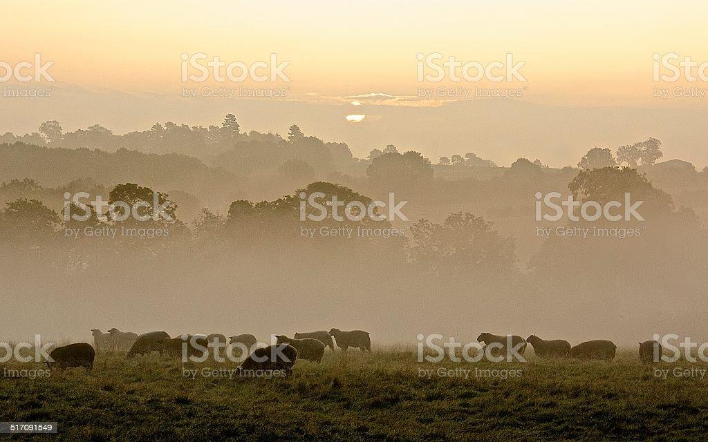 Autumn Morning Mist stock photo