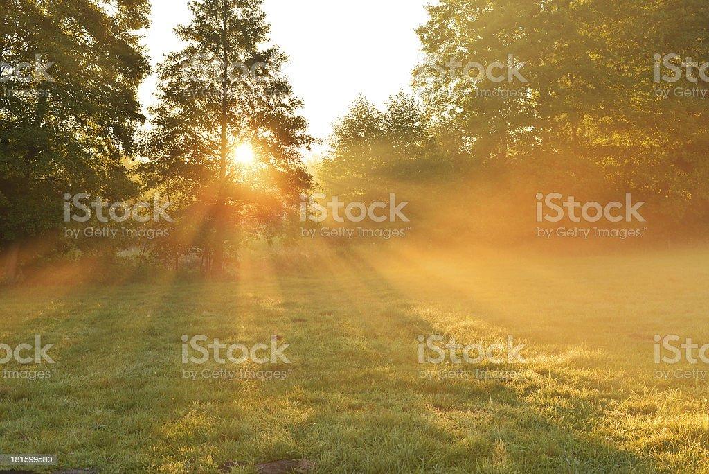 Autumn morning royalty-free stock photo