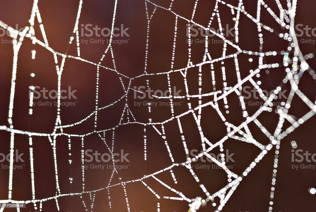 Autumn Morning Spider Web royalty-free stock photo