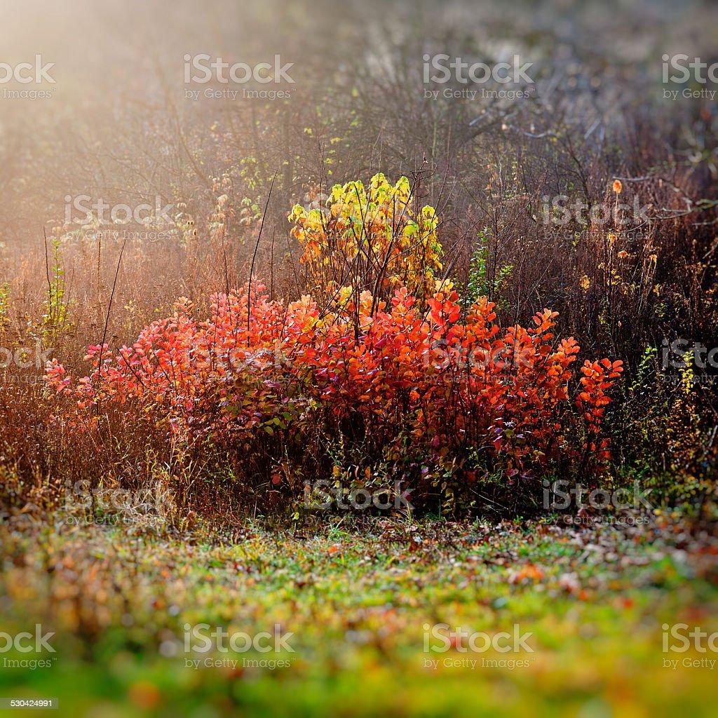 autumn motive stock photo