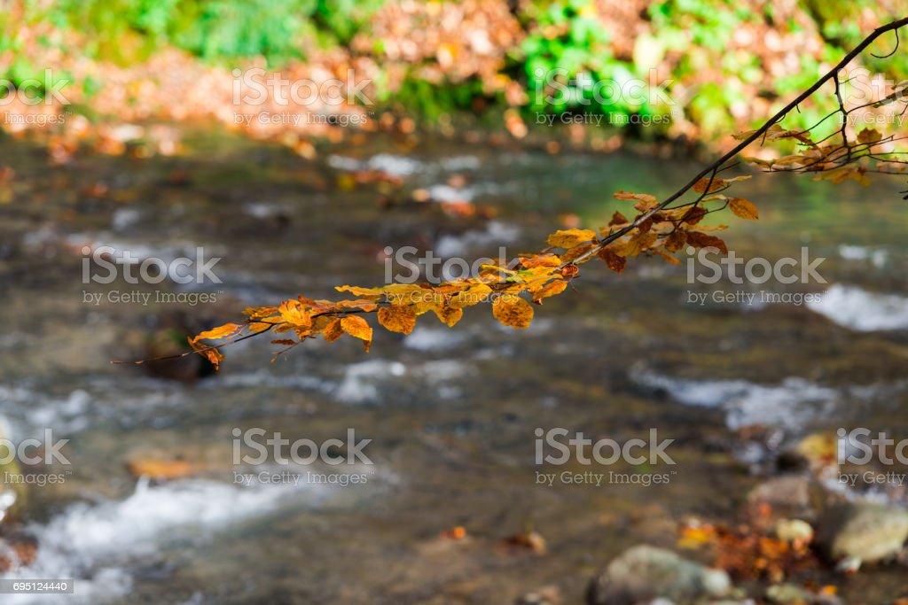 Autumn mountain forest stock photo