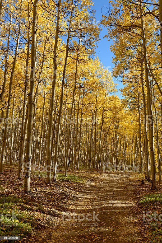 Autumn Mountain Trail stock photo