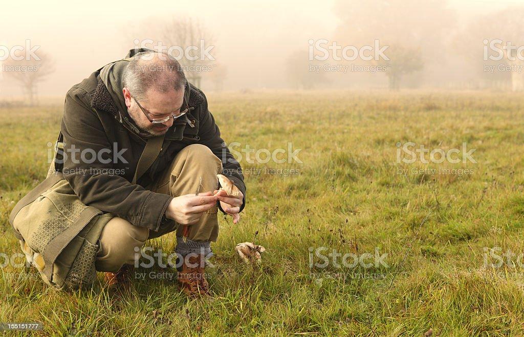 Autumn Mushroom Picking stock photo