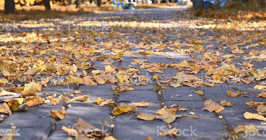Autumn natural baskground, tree, grass, footpath royalty-free stock photo