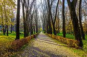 Autumn Nature in Park