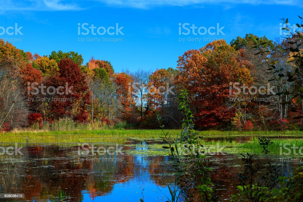 Autumn nature, landscape with birches on shore of forest lake. stock photo