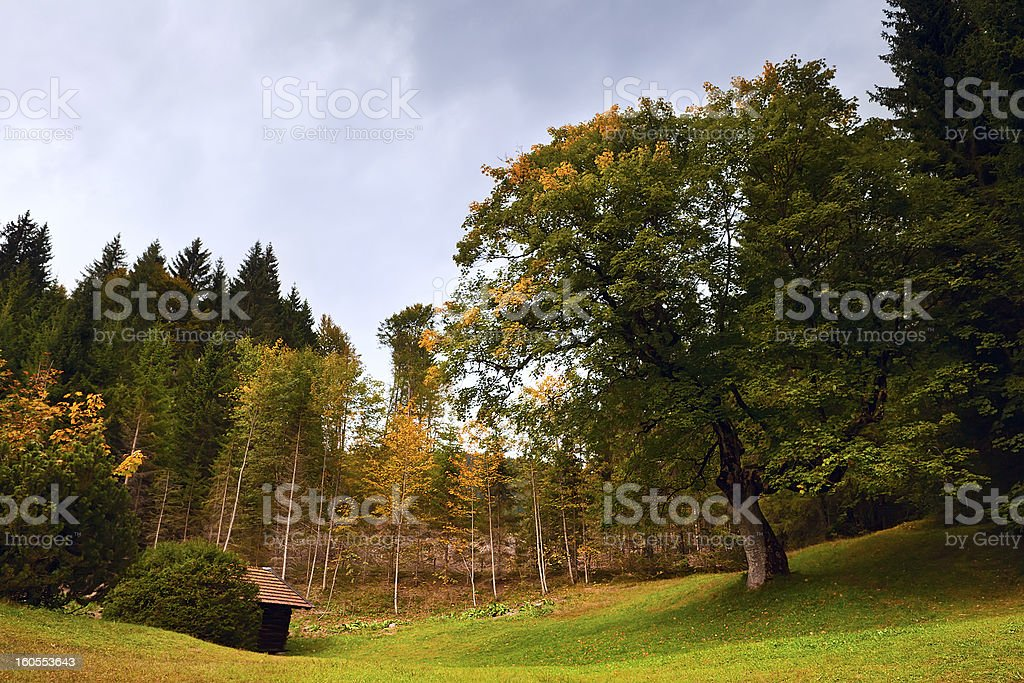 autumn oak royalty-free stock photo