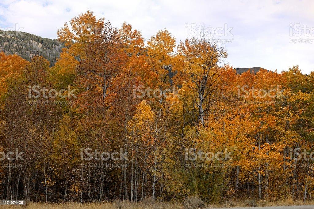 Autumn October stock photo